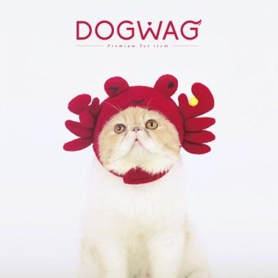 도그웨그 꽃게 모자 강아지 고양이 특이한 액세서리