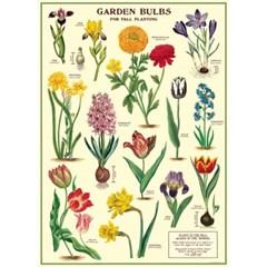 카발리니 포스터-Garden Bulbs