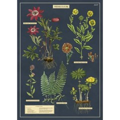 카발리니 포스터-Herbarium