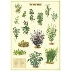 카발리니 포스터-Kitchen Herbes
