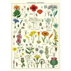 카발리니 포스터-Wildflowers