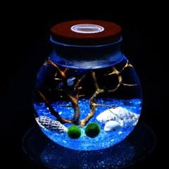 마리모 키우기 LED 유리병 꾸미기 코르크병
