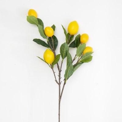 레몬 가지 조화