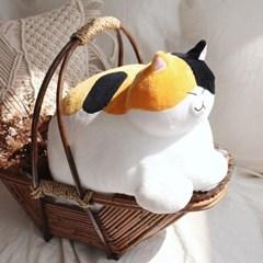 식빵뚱냥 고양이 인형 - 삼색