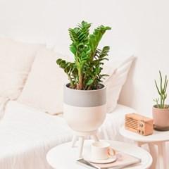 거실화분 공기정화식물 투티(L) Tutti(L) 스탠드 토분