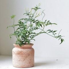 학자스민 밀크팟 토분 인테리어 식물