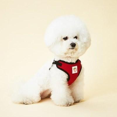 강아지하네스 이지핏 베이직하네스 S 강아지가슴줄 목줄