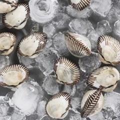 [남도장터]오병이어 벌교 새꼬막(특) 1.5kgx2