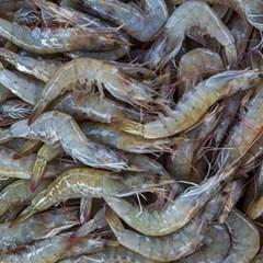 [남도장터]맛드림 신안 생물새우 1kg (35-45미)