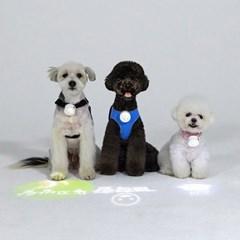 강아지 인싸템 패션펫플 LED 빔 펜던트 인식표 이름표