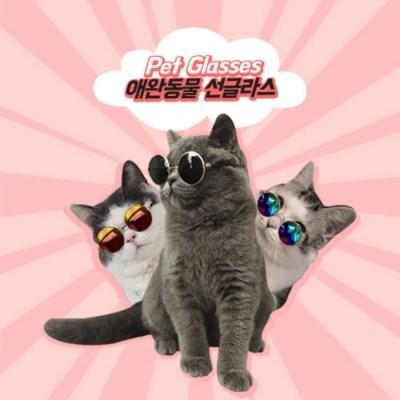 펫글라스 반려동물 선글라스