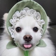 말차라떼 샤방캡 강아지모자 아소비진