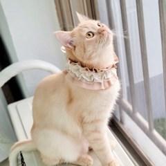 오가닉 알렉산드롱 레이스 고양이케이프 강아지케이프