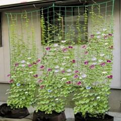 원예용 식물 지지대 그물 지주대 DD-11160