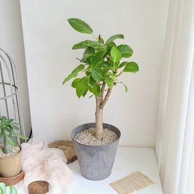 중소형화분 뱅갈 고무나무 저면관수 마블링 화분
