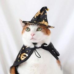 블랙 골드 마법사 망토 모자 고양이 강아지 할로윈 코스튬 Miyopet