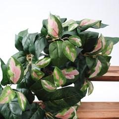 호야잎 부쉬