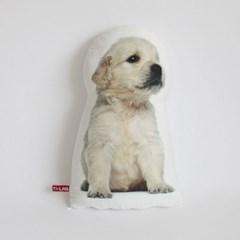pure puppy