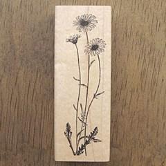 [꽃]데이지