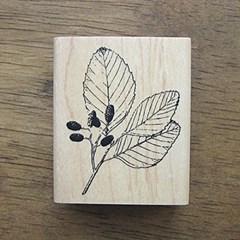 [나무&잎]오리나무잎
