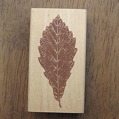 [나무&잎]떡갈나무잎
