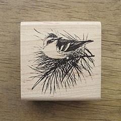 [동물&곤충]솔가지새