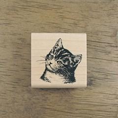 [동물&곤충]아기고양이 오스카