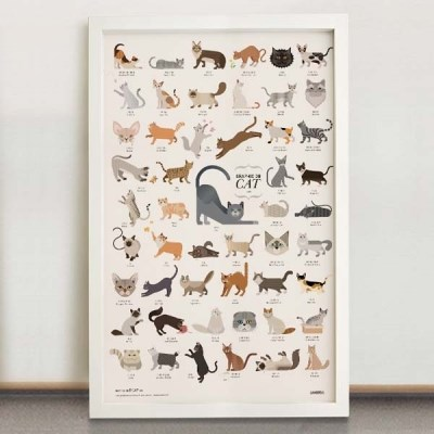 GRAPHIC DB - CAT 고양이