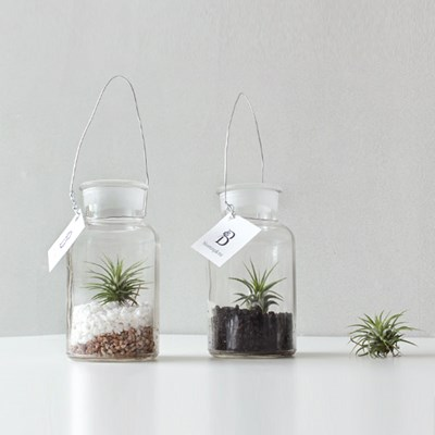 [공기정화식물]틸란드시아 시약병 (에어플랜트)