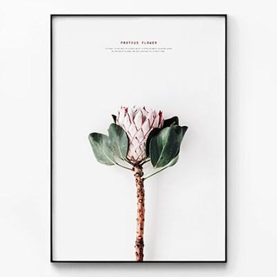 메탈 보타니컬 꽃 플라워 식물 포스터 액자 Proteus