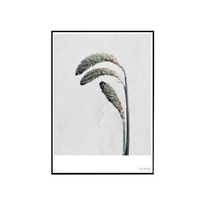 에포크 -페니세툼 (Pennisetum)-  Framed
