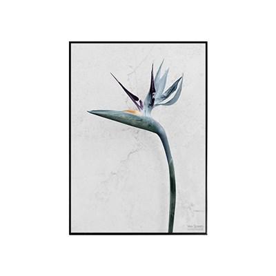 에포크-극락조(Strelitzia Reginae) framed