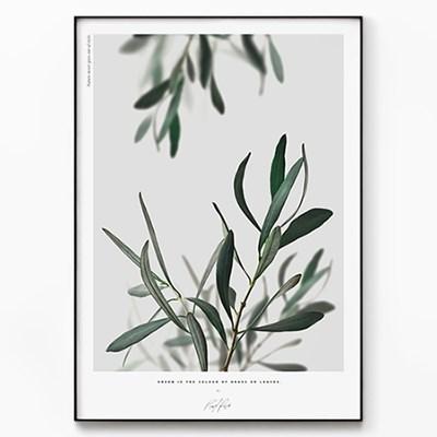 메탈 보타니컬 식물 포스터 액자 올리브 나무 사이로