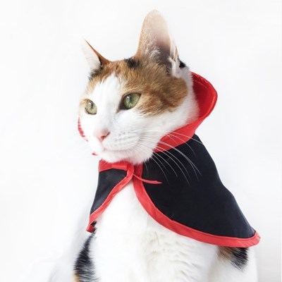 Miyopet 드라큘라 망또 고양이옷 강아지옷 코스튬 할로윈