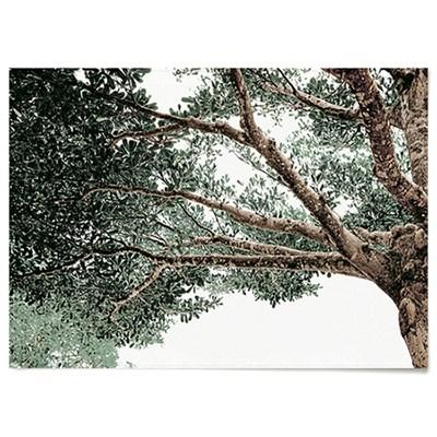 패브릭 포스터 F160 식물 나뭇잎 나무 그늘 D