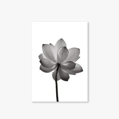[Monotone Series] Type B - Flower-2