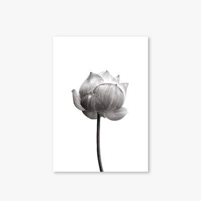 [Monotone Series] Type A - Flower-1