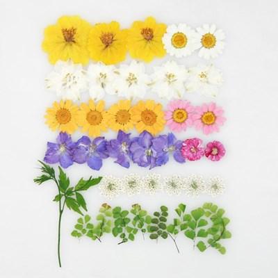 [압화 꽃모음 - B타입] 봄의정원 꽃모음