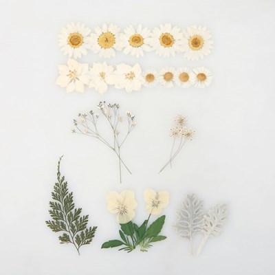 [압화 꽃모음 - A타입] 눈의꽃 꽃모음