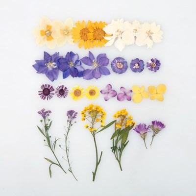 [압화 꽃모음 - A타입] 퍼플옐로우 꽃모음