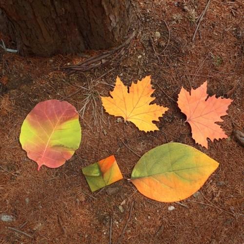 나뭇잎 편지지