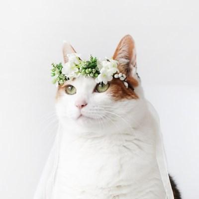 MIYOPET 화이트 화관 꽃 머리띠 고양이 강아지  모자