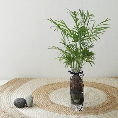 수경식물 - 테이블야자 유리화병set_(591007)