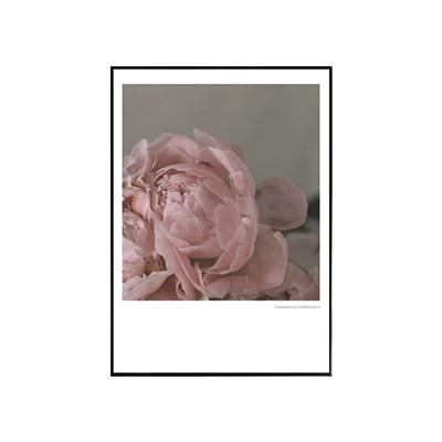 에포크 - 꽃시리즈 No.7 50x70