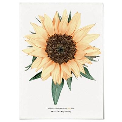 패브릭 포스터 F186 꽃 그림 식물 액자 해바라기 no.4