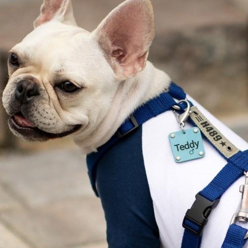 멍블리 강아지 이름표