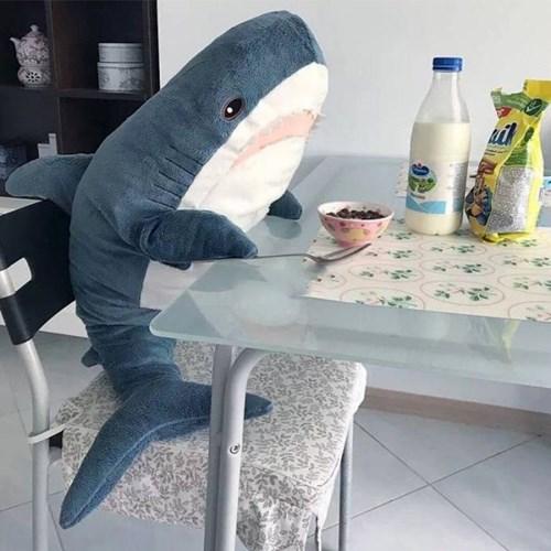 80cm100cm 초대형 상어인형 동물 수면 애착쿠션선물