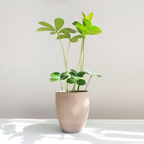 귀여운 멕시코 소철 토분 세트 공기정화식물