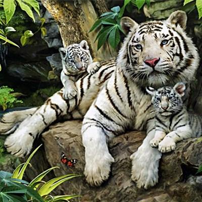 정글의 백호가족 [1000피스/직소퍼즐/동물/PL1289]_(658524)