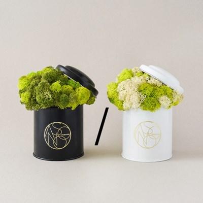 브로콜리 스칸디아 모스 실내공기정화식물[낱개상품][전국택배]